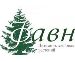 """Питомник хвойных растений """"Фавн"""""""