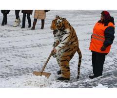 Уборка снега. Бригада русских разнорабочих.